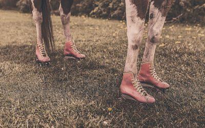 Top 10 erreurs que les gens font lors l'achat d'un premier cheval