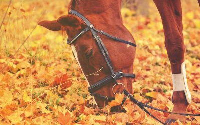 Alimentation du cheval : comment le nourrir pour qu'il reste en bonne santé ?