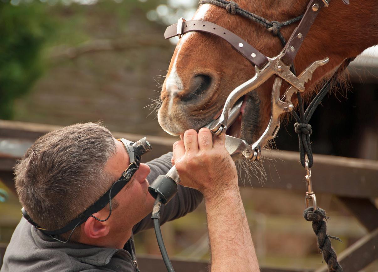 soins chevaux