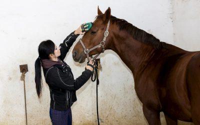 Prendre soin de son cheval, ça coûte combien ?