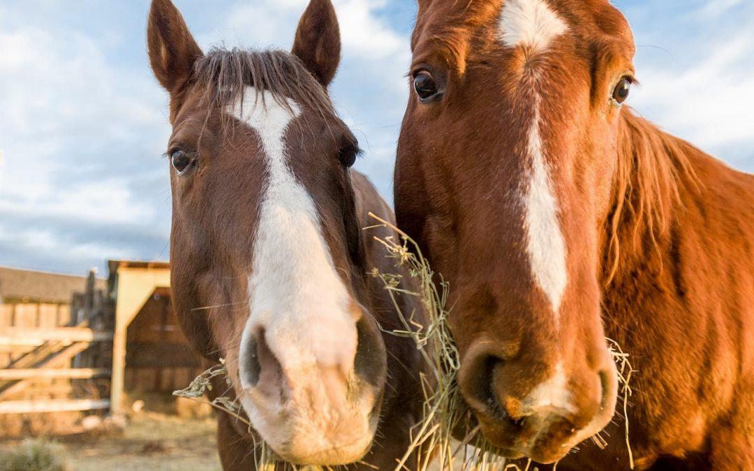 Les compléments alimentaires pour cheval, vraiment indispensables ?