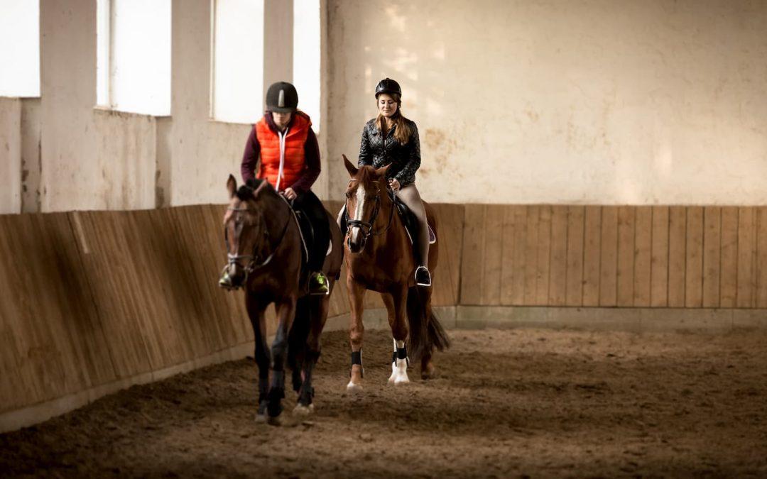 Gilet protection cheval, comparatif et avis