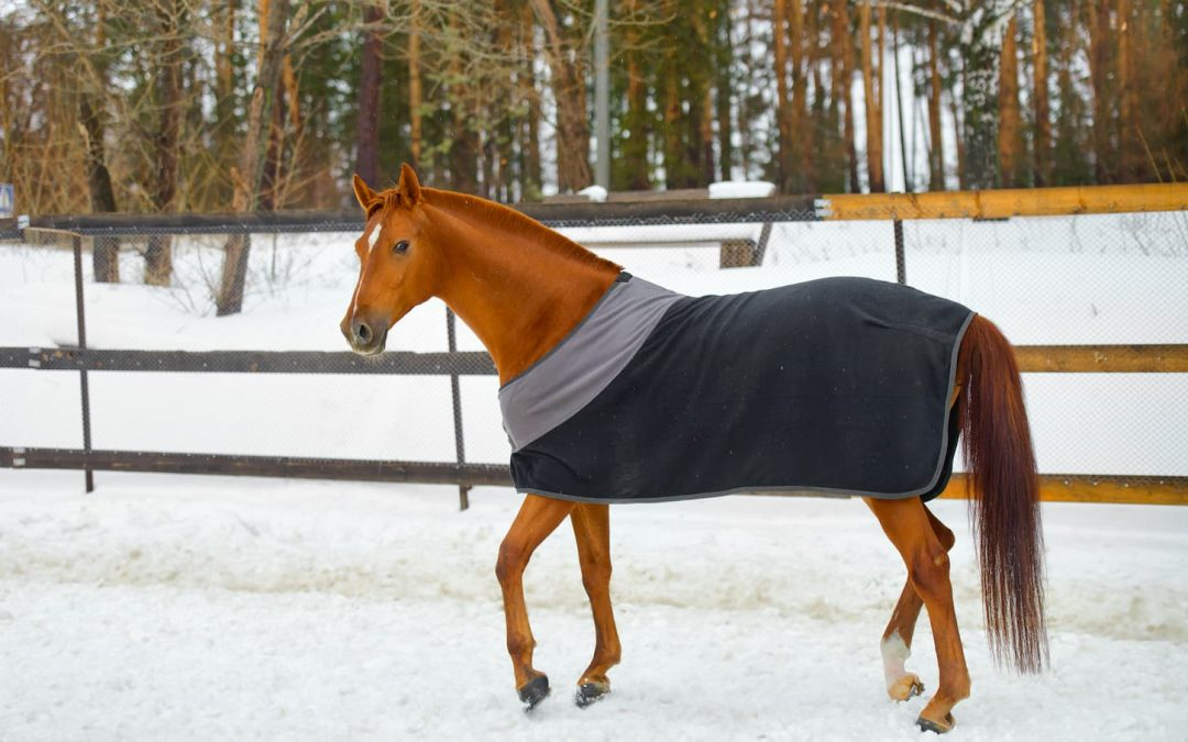 Couverture cheval, comparatif et avis