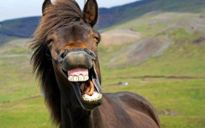 Vermifuge cheval, quand et comment ?