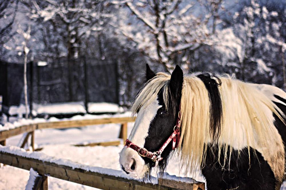 Conseils pour que votre cheval/poney passe l'hiver en pleine santé !