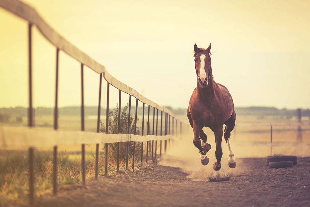 Combien de temps vit un cheval ?