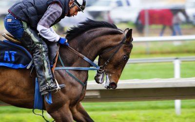 Maux de dos et équitation : ne blâmez pas le cheval mais ce qu'il y a dessus !