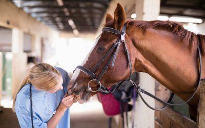Comment protéger les chevaux du soleil
