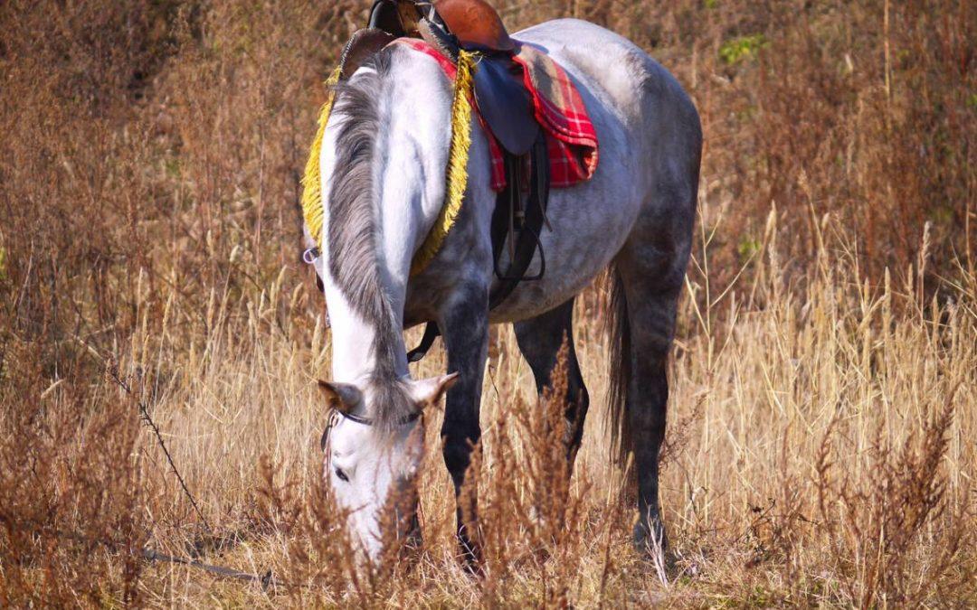 Équitation : comment bien choisir un tapis de selle ?