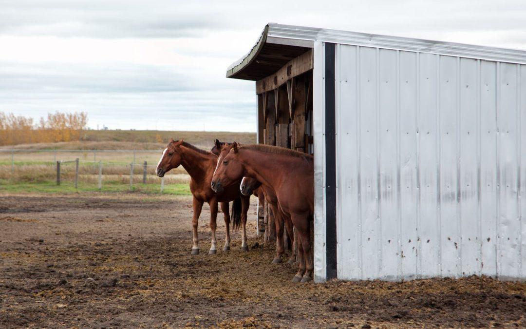 Fournir un abri pour son cheval : un élément essentiel à sa santé